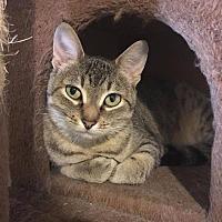 Adopt A Pet :: Lenore - Crocker, MO