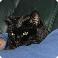 Adopt A Pet :: Spooky and Callie - Harriman, NY