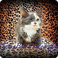 Adopt A Pet :: Kelsey - Warren, MI