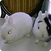 Adopt A Pet :: Benny - Maple Shade, NJ