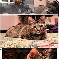 Adopt A Pet :: JASMINE - LOVERGIRL 25.00 - Rochester, NY