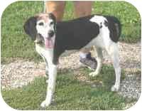 Beagle Mix Dog for adoption in Frankfort, Illinois - Allie-URGENT!!