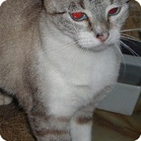 Adopt A Pet :: Caryn - Dallas, TX