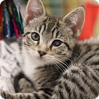 Adopt A Pet :: Mojo - Sacramento, CA