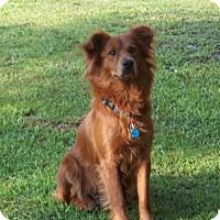 Adopt A Pet :: Honey - Murrells Inlet, SC