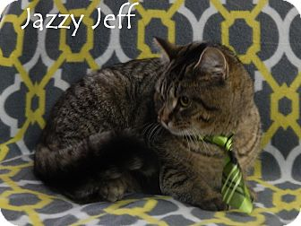 Domestic Shorthair Cat for adoption in Bucyrus, Ohio - Jazzy Jeff