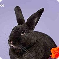 Adopt A Pet :: SPICE - Santa Fe, NM