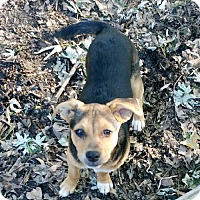 Adopt A Pet :: Manny - Olive Branch, MS