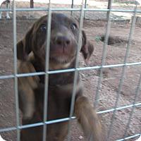 Adopt A Pet :: Lulu - Buchanan Dam, TX