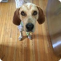 Adopt A Pet :: Wilhelmina Scott - DeSoto, IA