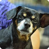 Adopt A Pet :: Betsy - Ogden, UT