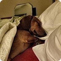 Adopt A Pet :: Rusty - Humble, TX
