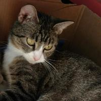Adopt A Pet :: Mercy - Des Moines, IA