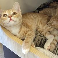 Adopt A Pet :: Psycho 2 - La puente, CA