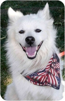 American Eskimo Dog Mix Dog for adoption in Sacramento, California - Tyson fun boy