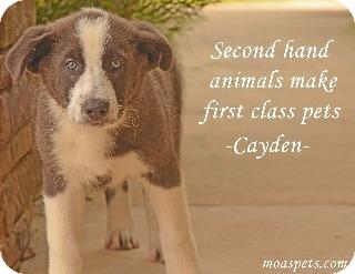 Collie/Husky Mix Puppy for adoption in Danielsville, Georgia - Cayden