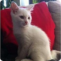 Adopt A Pet :: Blackjack - Montreal, QC