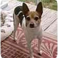 Adopt A Pet :: Butch - Albany, NY