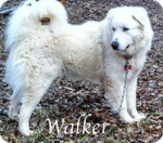 Great Pyrenees Mix Dog for adoption in Newnan, Georgia - Walker