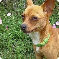 Adopt A Pet :: Babette - AUSTIN, TX