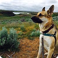 Adopt A Pet :: Sully - Hamilton, MT