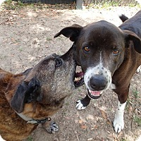 Adopt A Pet :: Joy - Ravenel, SC