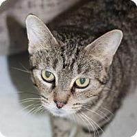 Adopt A Pet :: Pestle - Covington, LA
