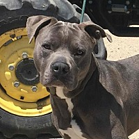 Adopt A Pet :: COURTESY LISTING: Blue - San Diego, CA