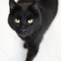 Adopt A Pet :: Blake - Binghamton, NY