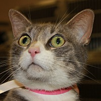Adopt A Pet :: PUMPKIN - Clayton, NJ