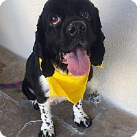 Adopt A Pet :: Monty - Canoga Park, CA