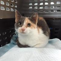 Adopt A Pet :: Custard - Austin, TX