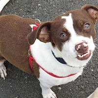 Adopt A Pet :: Smiley Riley - Napa, CA