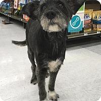 Adopt A Pet :: Jasper - Redondo Beach, CA