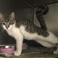 Adopt A Pet :: Allie - Newport, NC