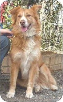 Australian Shepherd/Shepherd (Unknown Type) Mix Dog for adoption in Homewood, Alabama - Erin