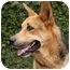 Photo 2 - German Shepherd Dog Mix Dog for adoption in Los Angeles, California - Rex von Rothchild