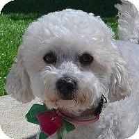 Adopt A Pet :: Sammi - La Costa, CA