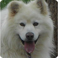 Adopt A Pet :: Kobuck - Arvada, CO