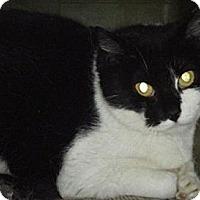 Adopt A Pet :: Mama (Barn Cat) - Kensington, MD