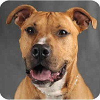 Adopt A Pet :: Axel - Chicago, IL