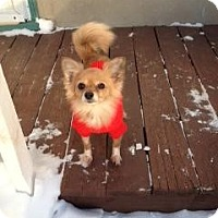 Adopt A Pet :: Posh - Saskatoon, SK