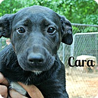 Adopt A Pet :: Cara - Vancleave, MS