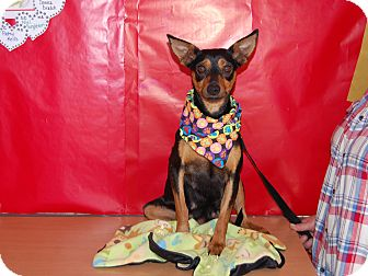Manchester Terrier Mix Dog for adoption in North Judson, Indiana - Betsy