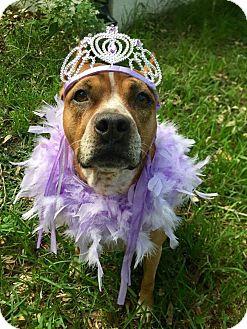 Boxer Mix Dog for adoption in Umatilla, Florida - Yoda