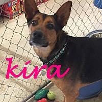 Adopt A Pet :: Kira - Scottsdale, AZ