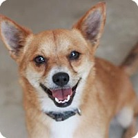 Adopt A Pet :: RANDALL - Kyle, TX