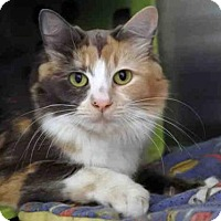 Adopt A Pet :: SUSIE Q - Anchorage, AK