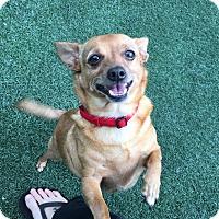 Adopt A Pet :: Lucille - San Diego, CA