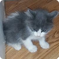 Adopt A Pet :: M&M - temecula, CA